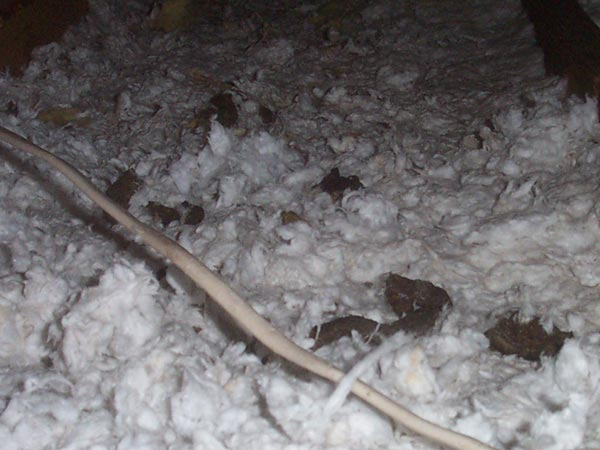 Raccoon Poop Photos http://www.247wildlife.com/raccoonatticcontamination.htm