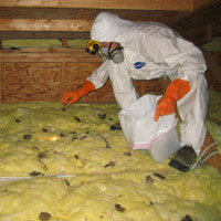 Attic Restoration Cleaning And Decontamination