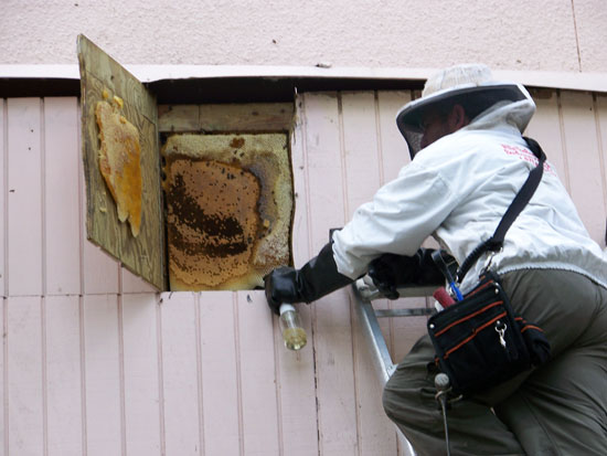 Hire a Professional Bee Removal Company for Permanent Bee Control