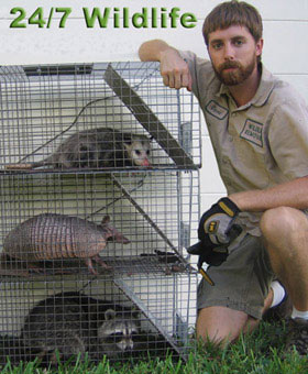 Image of: Wikipedia Jacksonville Pest Control Wildlife Removal Allstate Animal Control Jacksonville Animal Control Wildlife Removal