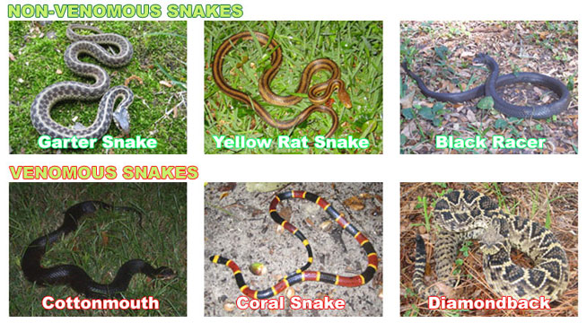 How To Identify Dangerous Snakes from Safe Ones - Is the