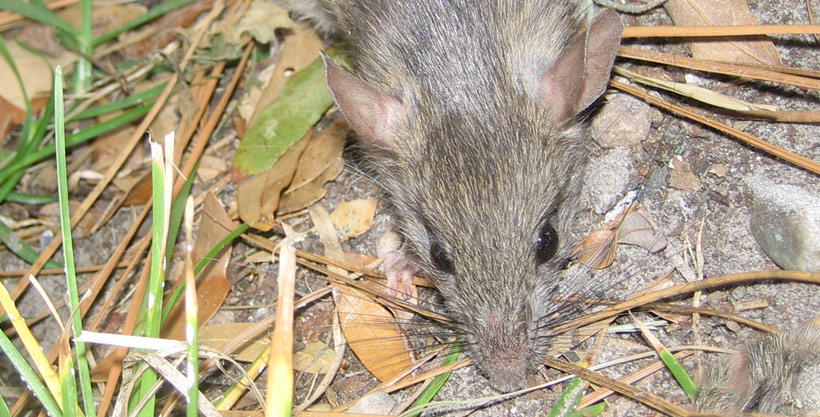 How to keep rodents out of my garden
