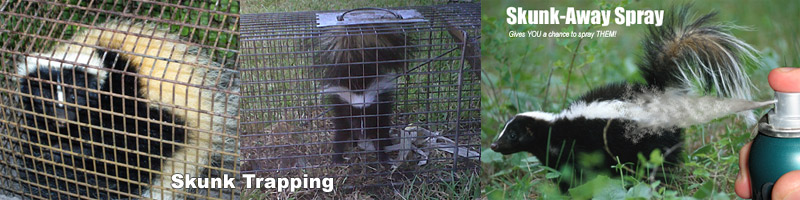 How to Keep Skunks Out of Your Yard