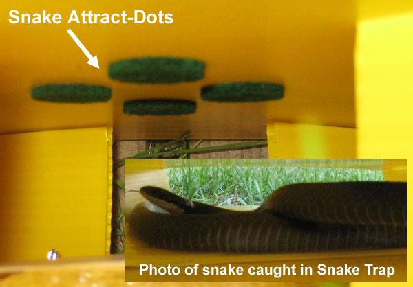 Snake trap to catch snakes