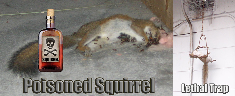 Can Poison Be Used To Kill Squirrels