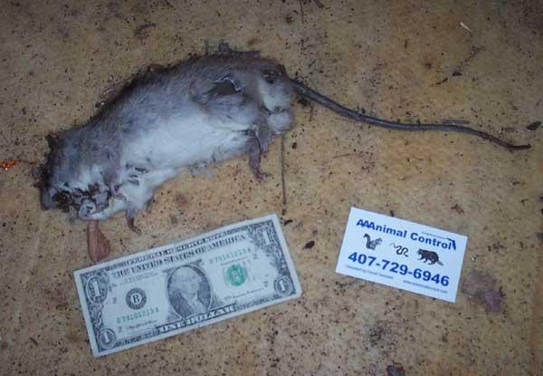 Dead Squirrel Get Well Soon 88569 Loadtve