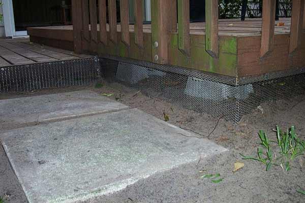 Animal Living Under The Deck or Shed - Opossum Possum Control