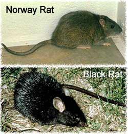 Florida Animal Control